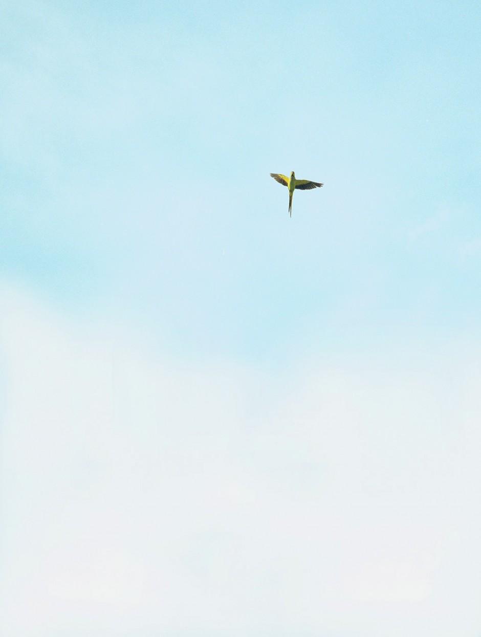 Roblox Wings Of Glory Hacks Aplicativo Para Ganhar Robux Project M E G U M I